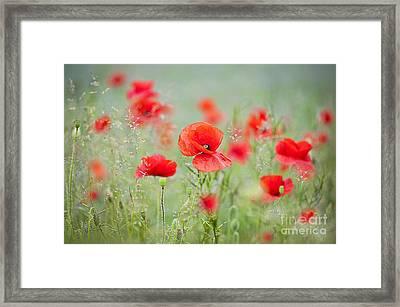 Field Poppies Framed Print by Jacky Parker