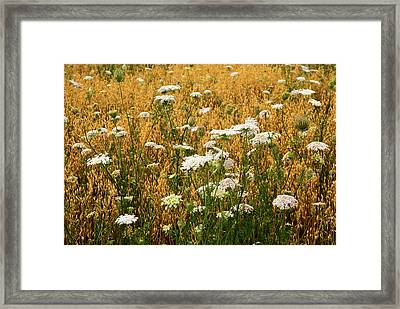 Fields Of Lace Framed Print by Christi Kraft