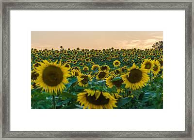 Fields Of Yellow  Framed Print by Kristopher Schoenleber