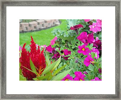 Fiery Pleasures And Frolic Framed Print by Suzanne Perry