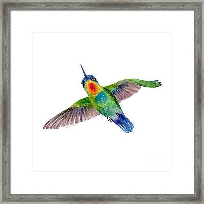 Fiery-throated Hummingbird Framed Print by Amy Kirkpatrick