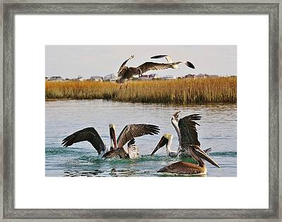 Fighting For A Fish Dinner Framed Print by Paulette Thomas