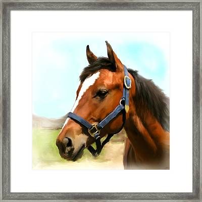 Filly Framed Print by Paul Tagliamonte