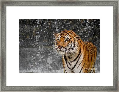 Final Drops Framed Print by Ashley Vincent