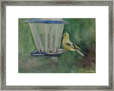 Finch Framed Print by Betty Pimm