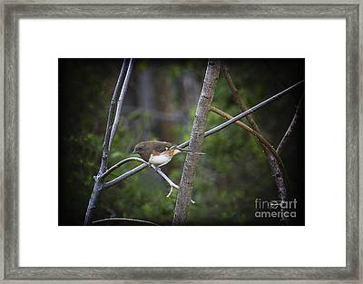 Finding A Mate Framed Print by Cris Hayes