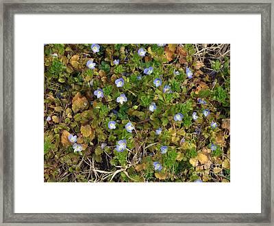 Finding Clover Framed Print by Brenda Dorman