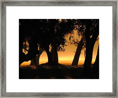 Finding Gold Framed Print by Laura Ragland