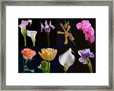 Fine Art Flower Photography Framed Print by Juergen Roth