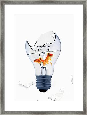Fine Art Untitled No.26 Framed Print by Caio Caldas
