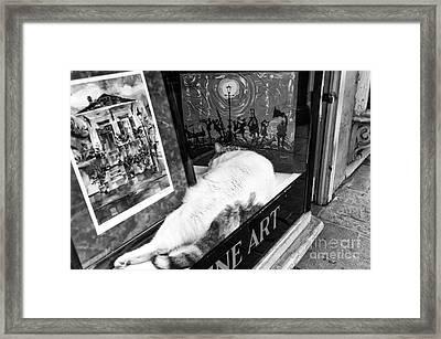Fine Cat Art Mono Framed Print by John Rizzuto