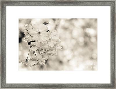 Finest Spring Time - Bw Framed Print by Hannes Cmarits