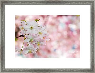 Finest Spring Time Framed Print by Hannes Cmarits