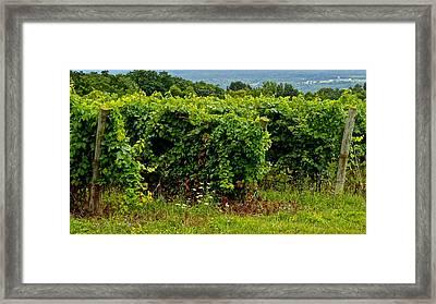 Finger Lakes Vineyard Framed Print by Frozen in Time Fine Art Photography