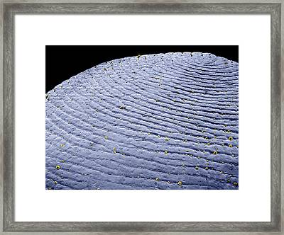 Fingertip Skin Framed Print by Thierry Berrod, Mona Lisa Production