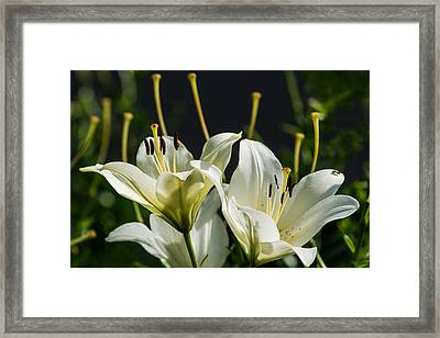 Finishing Blossoming - Featured 3 Framed Print by Alexander Senin