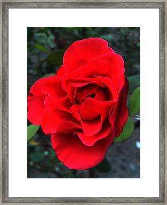 Fire Framed Print by Lucy D