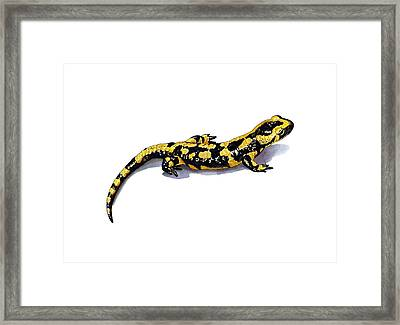 Fire Salamander, Artwork Framed Print by Science Photo Library