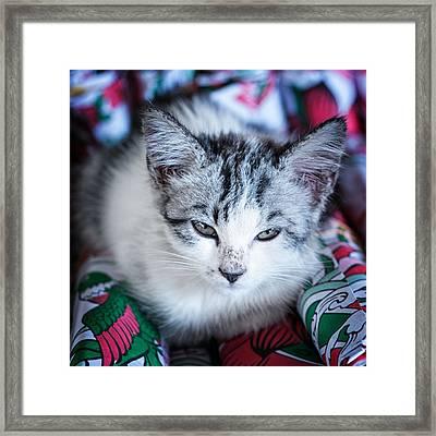 Firecracker Kitten Framed Print by Zoe Ferrie