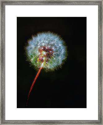 Firework Dandelion Framed Print by Bill Tiepelman