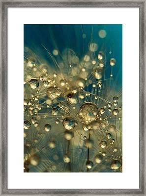 Firework Dandy In Blue Framed Print by Sharon Johnstone