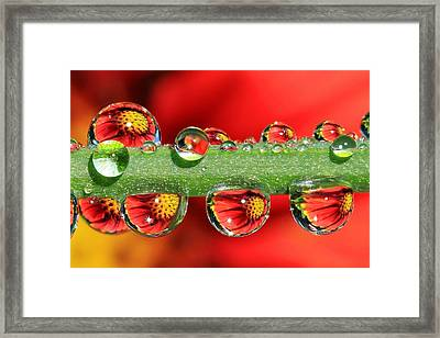 Firey Drops Framed Print by Gary Yost