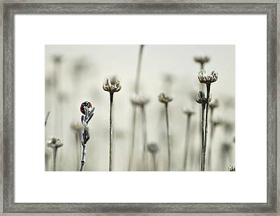 Firm Framed Print by Guido Montanes Castillo