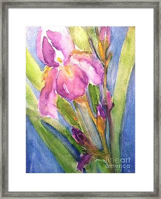 First Bloom Framed Print by Sherry Harradence
