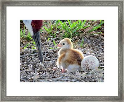 First Chick Framed Print by Zina Stromberg