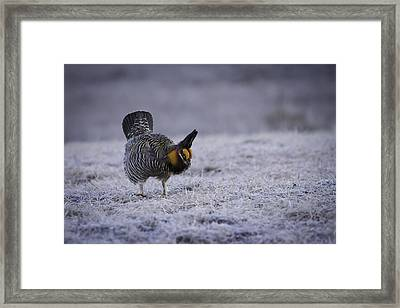 First Light 2 Framed Print by Thomas Young