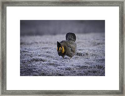 First Light 4 Framed Print by Thomas Young