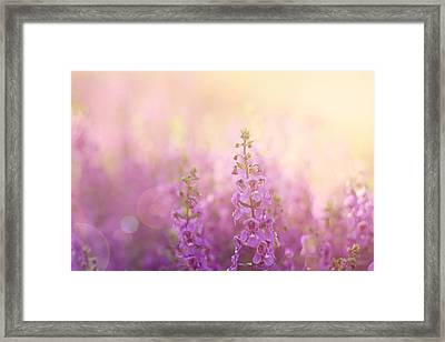 First Light Framed Print by Amy Tyler