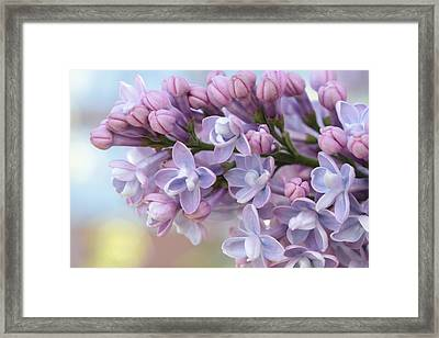First Love's Soft Glow Framed Print by Connie Handscomb