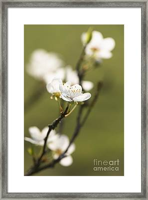 First Signs Of Spring Framed Print by Anne Gilbert