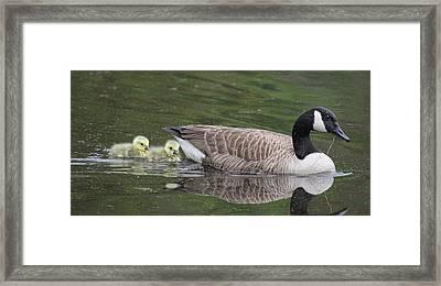 First Swim Framed Print by Veronica Ventress