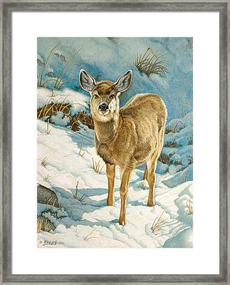 First Winter  - Fawn Framed Print by Paul Krapf