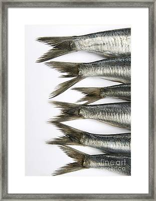 Fish Framed Print by Bernard Jaubert