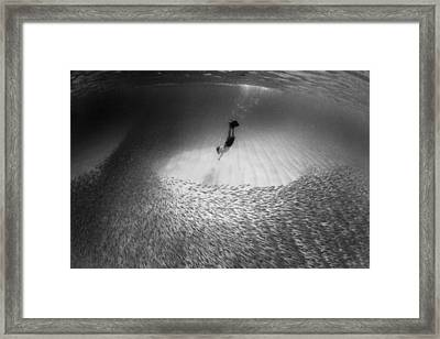 Fish Dive Framed Print by Sean Davey