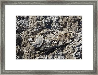 Fish In Salton Sea Framed Print by Jim West