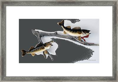 Fish Mount Set 06 B Framed Print by Thomas Woolworth