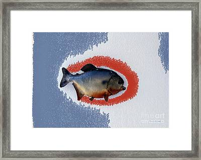 Fish Mount Set 12 B Framed Print by Thomas Woolworth