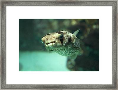 Fish - National Aquarium In Baltimore Md - 1212135 Framed Print by DC Photographer