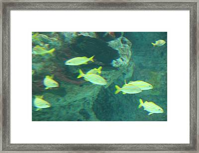 Fish - National Aquarium In Baltimore Md - 1212141 Framed Print by DC Photographer