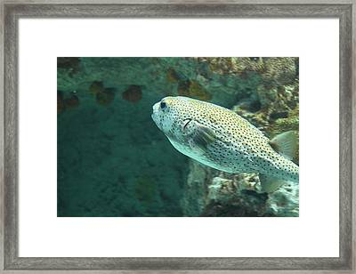 Fish - National Aquarium In Baltimore Md - 121259 Framed Print by DC Photographer