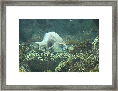 Fish - National Aquarium In Baltimore Md - 121261 Framed Print by DC Photographer