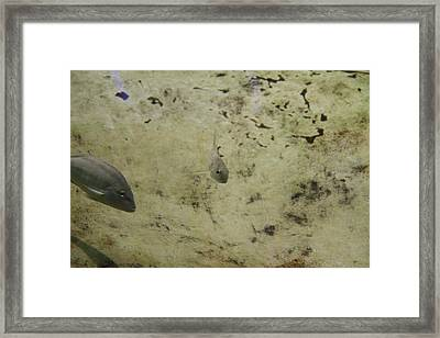 Fish - National Aquarium In Baltimore Md - 121289 Framed Print by DC Photographer