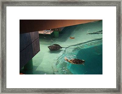 Fish - National Aquarium In Baltimore Md - 12129 Framed Print by DC Photographer