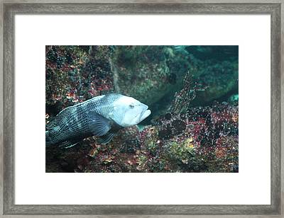 Fish - National Aquarium In Baltimore Md - 121291 Framed Print by DC Photographer