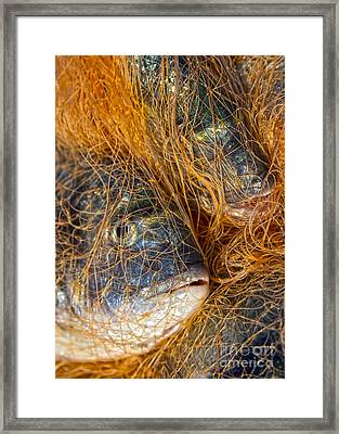 Fish On The Net Framed Print by Stelios Kleanthous