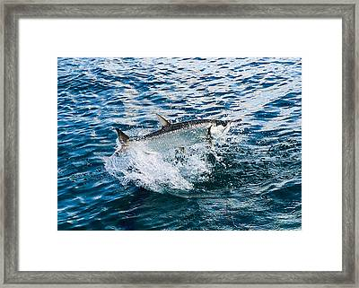 Fish Out Of Water Framed Print by  Michael Glenn